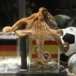 Paul the Octopus Predict Spain to beat Germany in World Cup semifinal