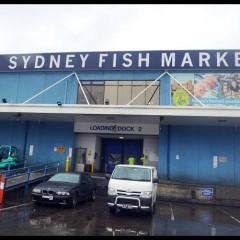 Sydney Fish Market @ Bank St Pyrmont, Sydney