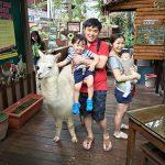Fun Day with Animals @ KL Tower Mini Zoo