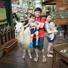 Fun Day with Animals @ KL Tower Mini Zoo