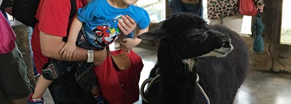 A Day With Animals @ Farm In The City 城の农场