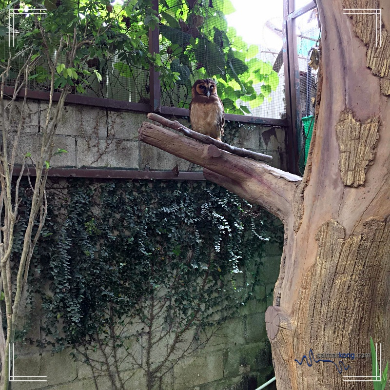 A Day With Animals @ Farm In The City 城の农场 - Twilight creature - owl