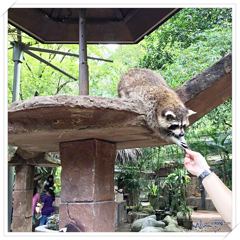 Fun Things To Do @ Lost World Of Tambun, Ipoh - Petting Zoon: Among the animals that you can see here are raccoons, hamsters, porcupines, rabbits, tortoises, parrots, zebra, ostrich and more!